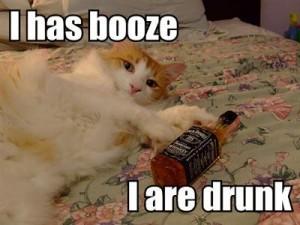 i-has-booze-i-are-drunk